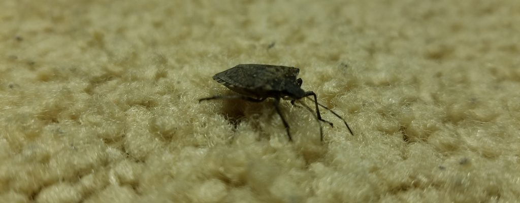 Stink Bugs Are Filth