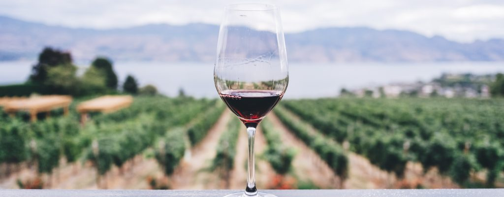 Wine: How to Drink It like a Really Smart Person