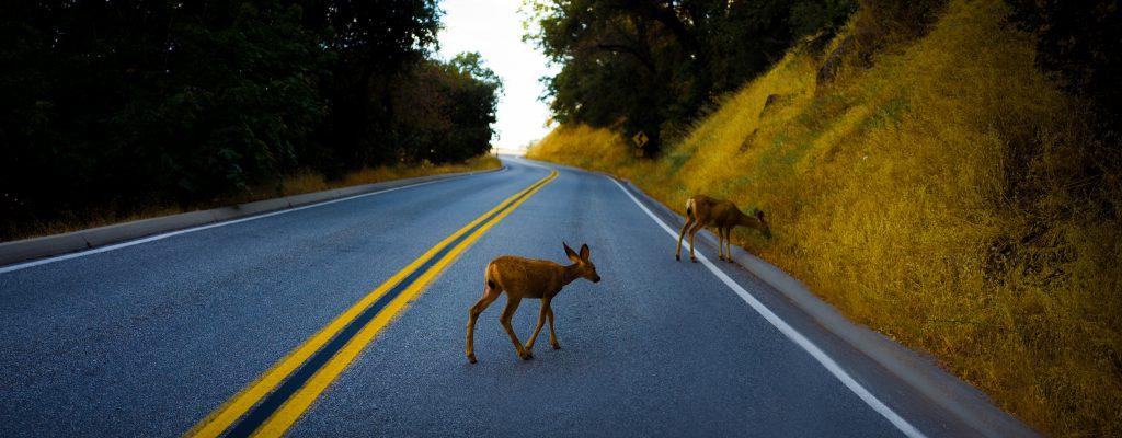 Run For Deer Life