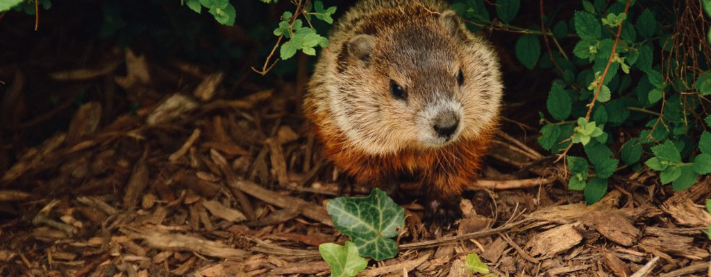 Groundhog Town Council Minutes